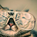 Cat, Glasses, Eyewear, Pet, Furry, Animal, Funny, Cute