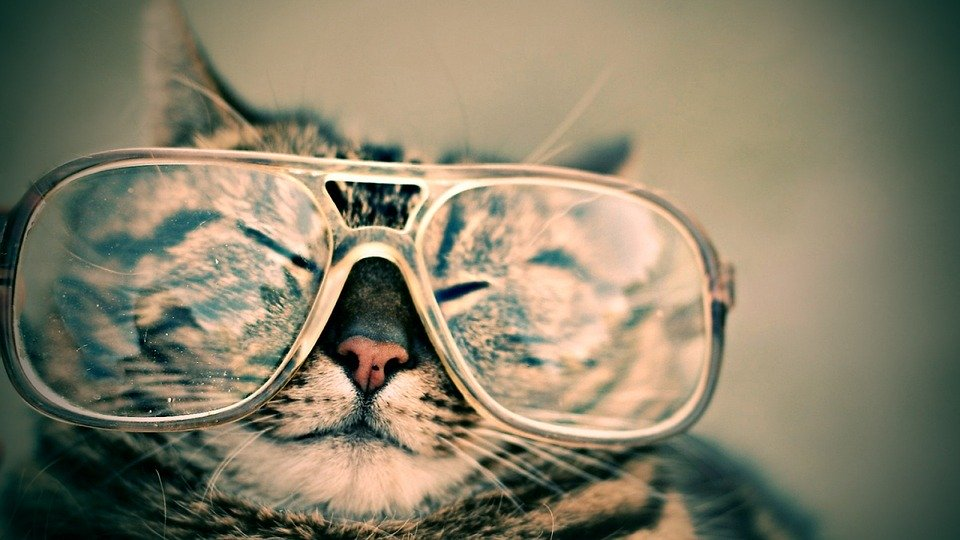 Cat, Glasses, Eyewear, Pet, Furry, Animal, Funny, Cute